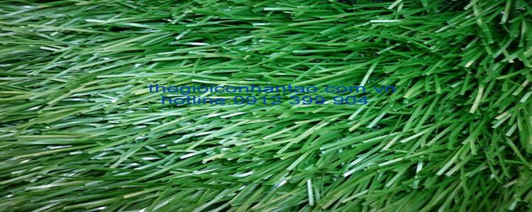 cỏ nhân tạo mã dvn 12