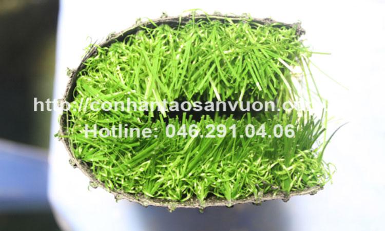 Chi tiết sản phẩm cỏ nhân tạo sân vườn 3