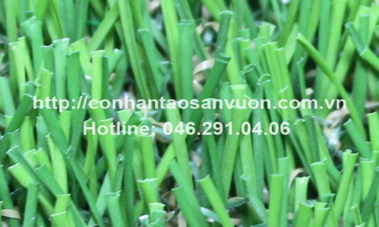 Cỏ sân vườn DVN - S25 1
