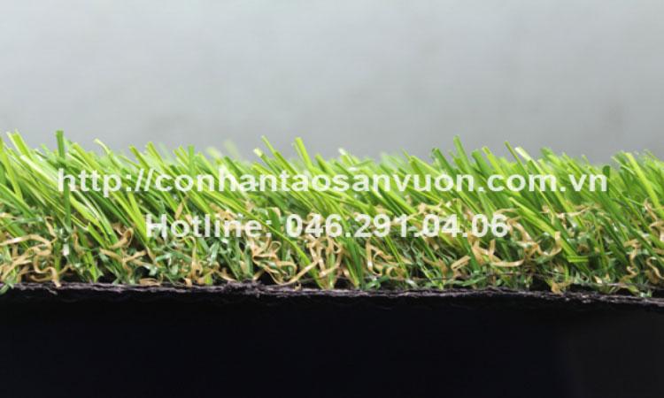 Cỏ sân vườn DVN - S25 4