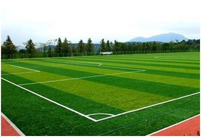 Sân bóng đá cỏ nhân tạo phát triển rầm rộ tại Thanh Hóa 1