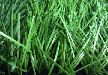 Cung cấp cỏ nhân tạo DVN 16D
