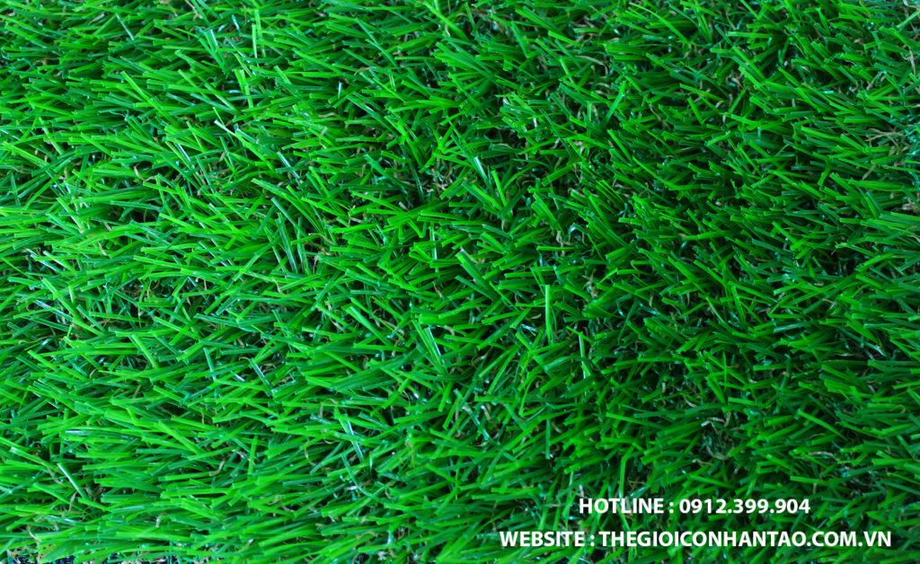 Tiêu chuẩn để đánh giá cỏ sân vườn giá rẻ mà chất lượng 1