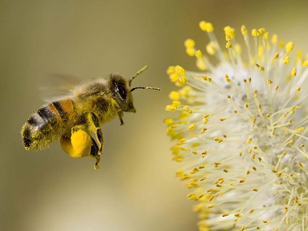Bụi, phấn hoa và khí thải 1