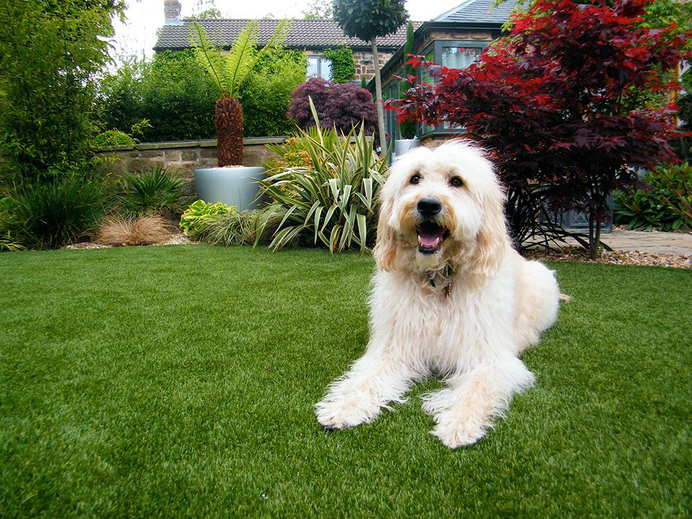Vệ sinh thảm cỏ cho thú cưng chơi