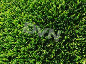 6. Mật độ thảm cỏ 1