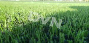 4. Về chiều cao của sợi cỏ nhân tạo 2