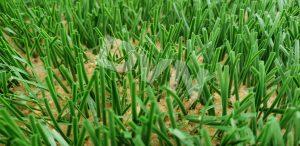 Sân cỏ sẽ tự nhiên khi dùng sân cỏ nào? 3