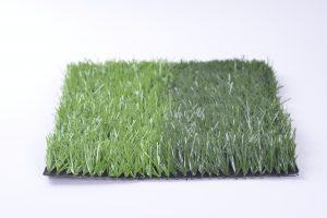 1.Hãy xem màu cỏ đầu tiên. 1