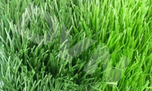 Một số mẫu cỏ nhân tạo sân bóng tiêu biểu 2