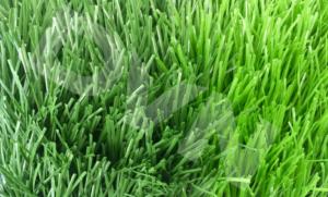 Một số mẫu cỏ nhân tạo sân bóng tiêu biểu 4