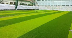 1.Hãy xem màu cỏ đầu tiên. 4
