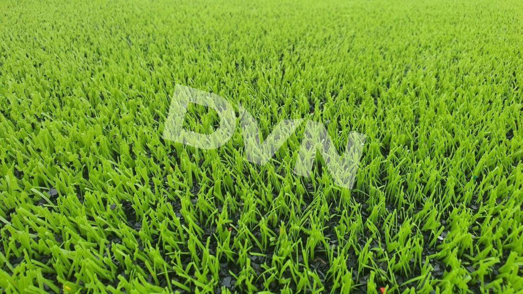 Cỏ nhân tạo của công ty DVN có những ưu điểm gì? 2