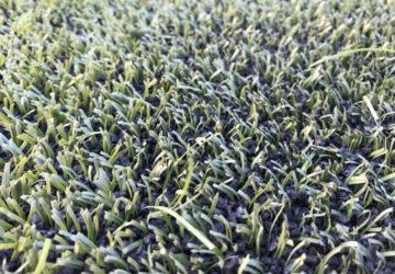 Sân cỏ nhân tạo cần được bảo dưỡng sau thời gian sử dụng