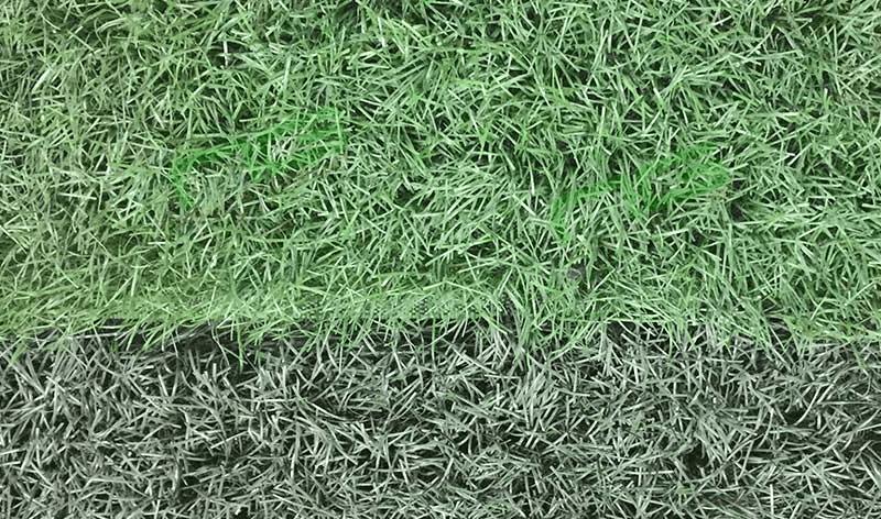 Màu sắc cỏ thanh lý sân bóng