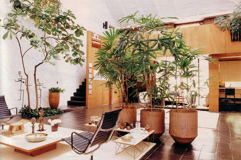 Trang trí nhà với cây xanh
